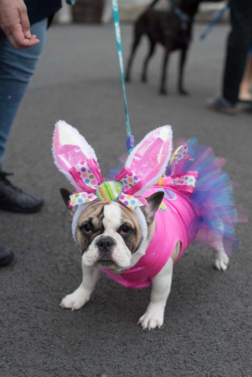 spring easter dog-1
