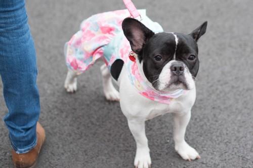 spring easter dog-2